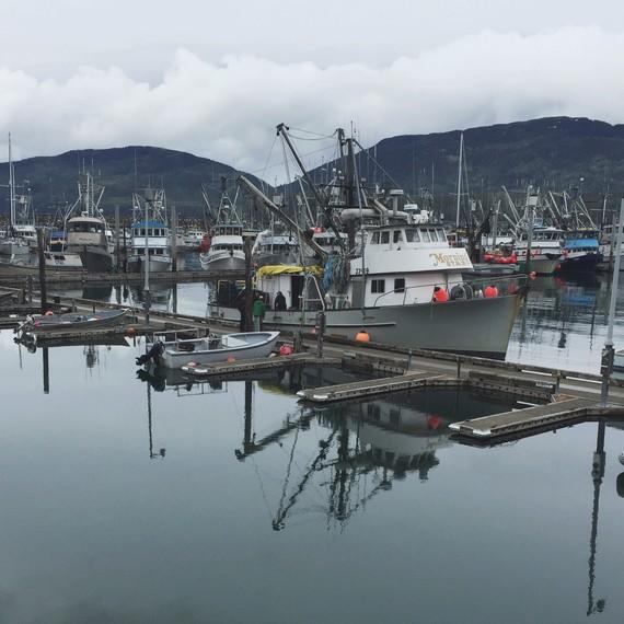 boats in cordova harbor drifters fish