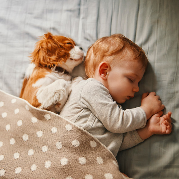 Prep Your Pet: Introducing Your New Baby to Your Fur Baby