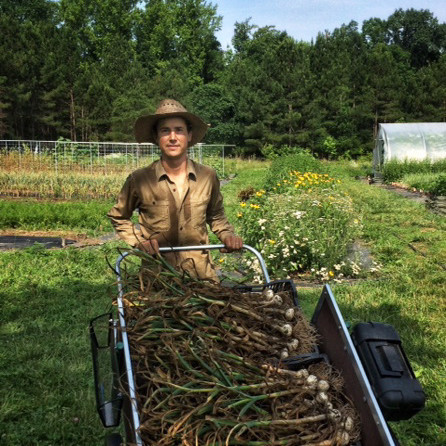 cart of garlic at ten mothers farm