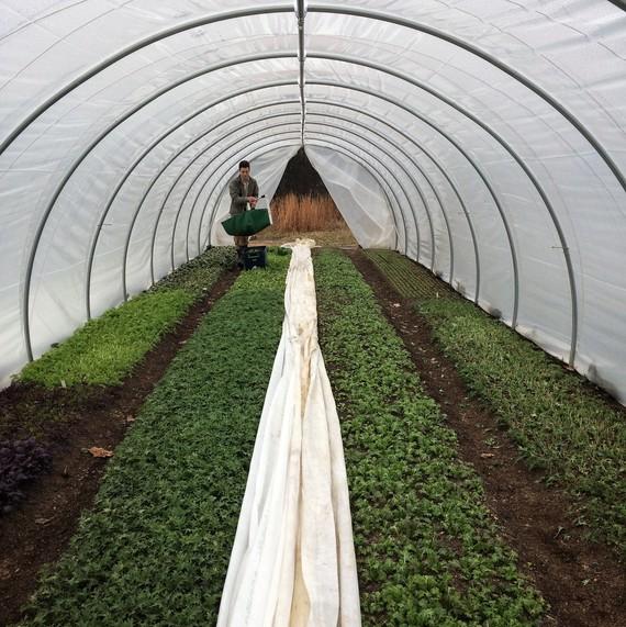 环屋花园十个母亲农场