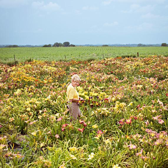 nan ripley daylily field