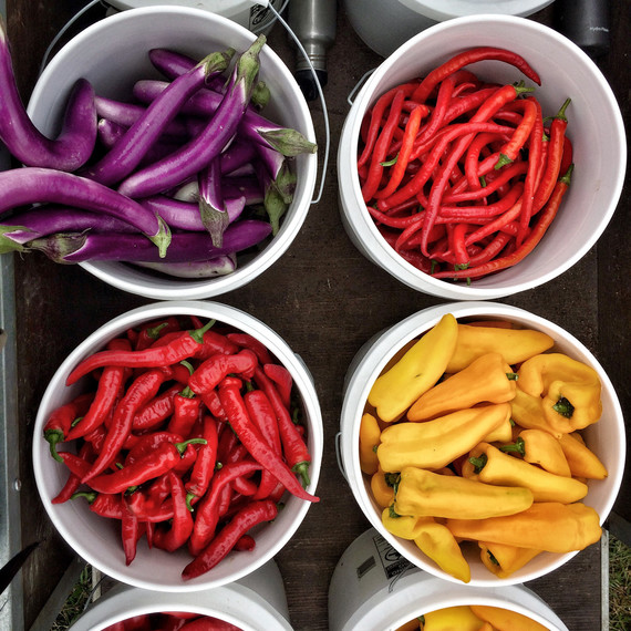peppers and eggplants in buckets