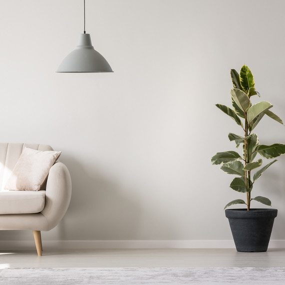 A Guide to Transitioning Tropical Plants Indoors