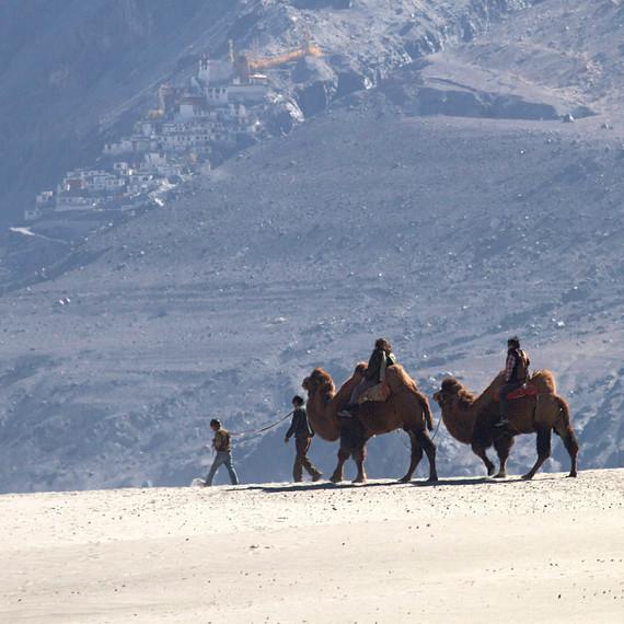 camel safari the ultimate travelling camp