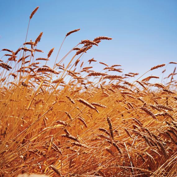 hayden-flour-mills-landscape-131-d112232r.jpg