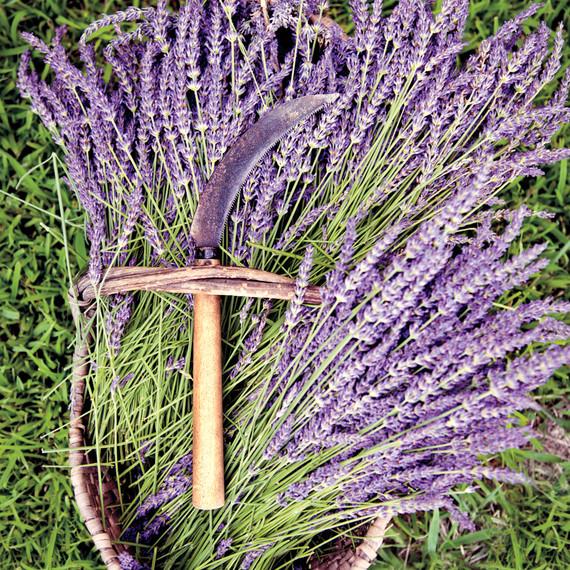 lavender-gherman-blueskye-20-edit-d110407.jpg