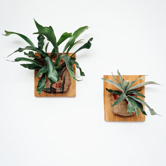 pistils-nursery-burlap-stagorn-fern-group.jpg
