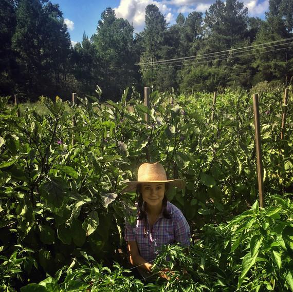 vera farming harvesting in field