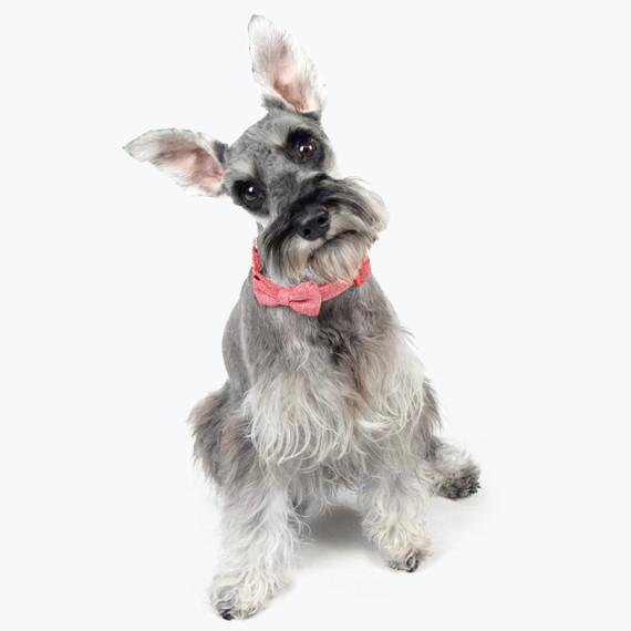 dog wearing red tweed bowtie amazon