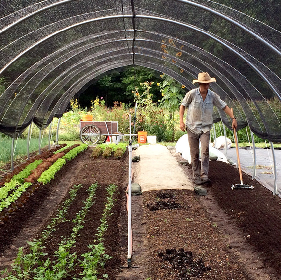 direct seeding crops ten mothers farm