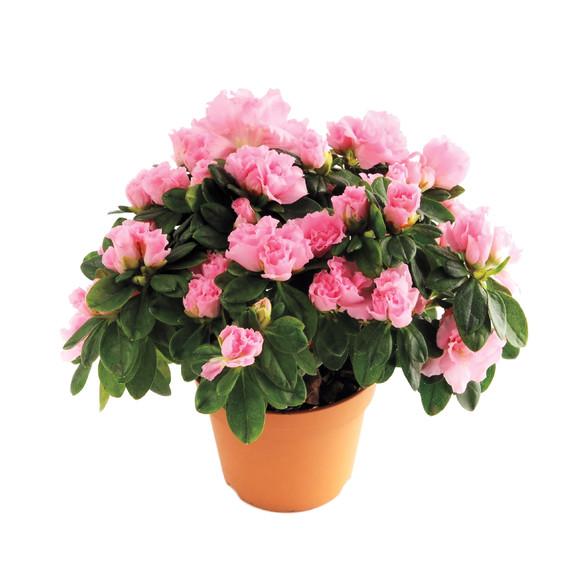flowers-s111153-istock-000018867429-medium.jpg