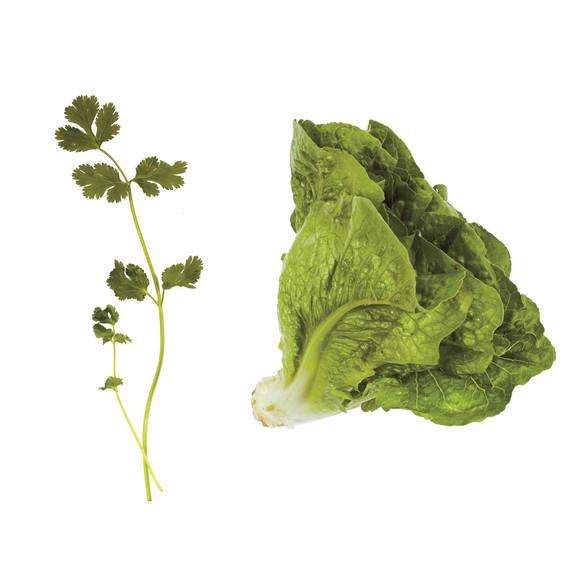 lettuce-pairings-cilantro-romaine-md110971.jpg