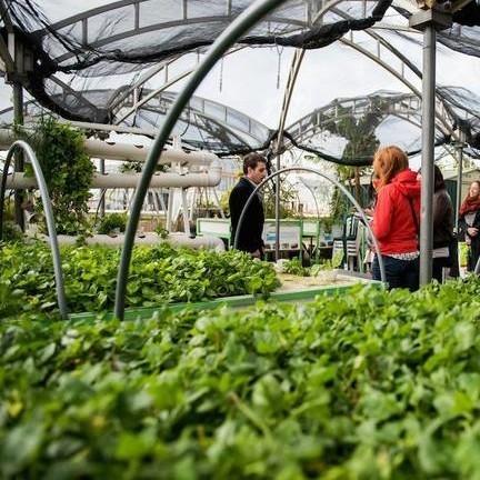 dizengoff-tel-aviv-garden-roof-urban-farming-2-0117