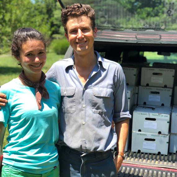 vera gordon csa boxes ten mothers farm vegetables