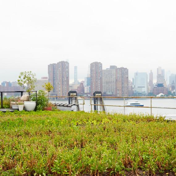 urban garden annie novak