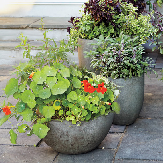 4 Steps To A Container Kitchen Garden