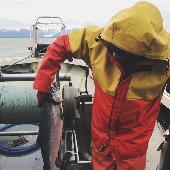 river salmon