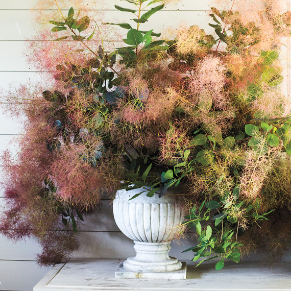 smokebush-arrangement-2014.33.5d.744-d111407.jpg