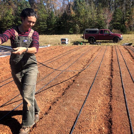 vera preparing ground for garlic to be planted