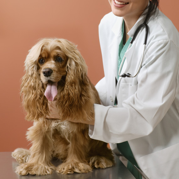 female-veterinarian-and-spaniel-dog-getty-0519
