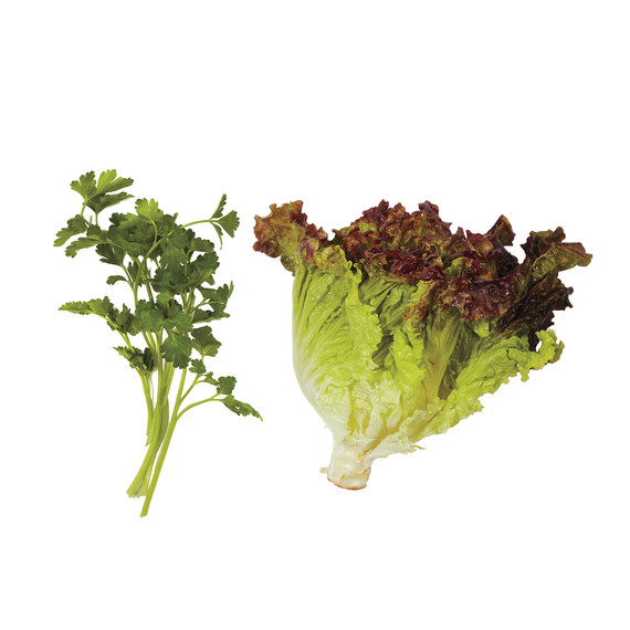 lettuce-pairings-parsley-leaf-lettuce-md110971.jpg
