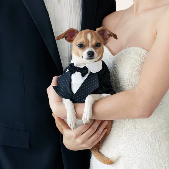 wedding-pet-clothes-dog-couple-096-d111997-0515.jpg