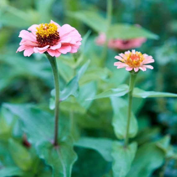 urban farmer annie novak flowers