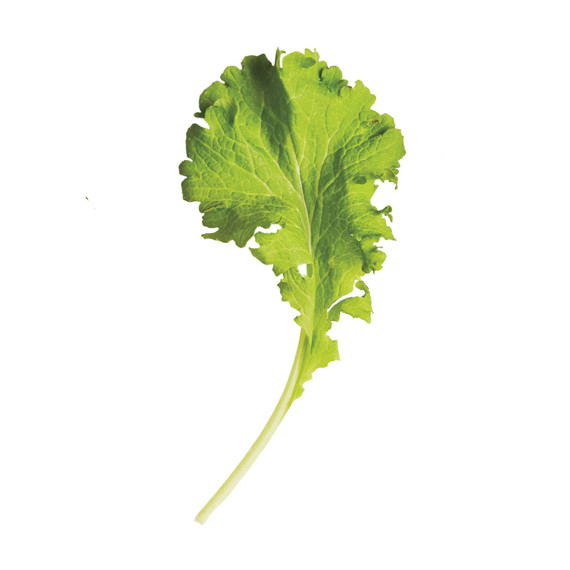 glossary-greens-0121-d112652-0216-mustard-greens.jpg