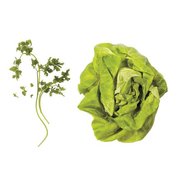 lettuce-pairings-chervil-butter-lettuce-md110971.jpg
