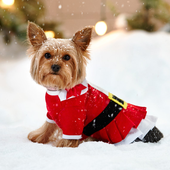 2--petsmart-small-dog-in-snow-0988-d112475_vs_r2a.jpg