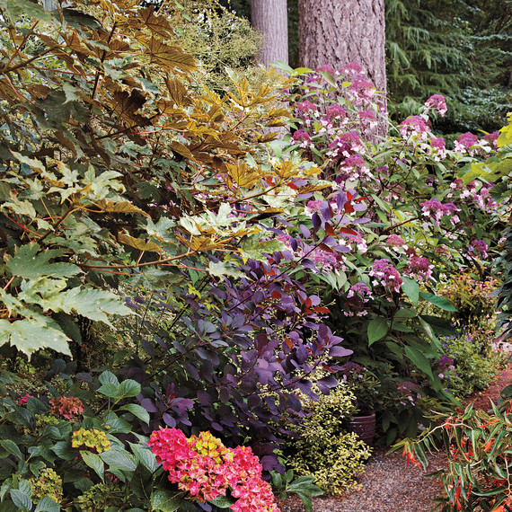 heckler-hydrangea-garden-522462aj-dsc8136-s111010.jpg