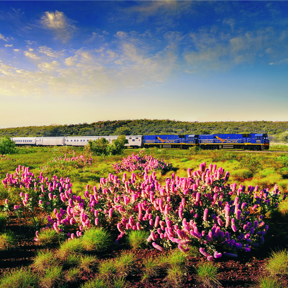 Railbookers Indian Pacific train with wildflowers
