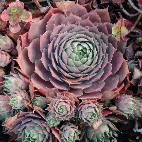 Plant_040116.jpg (skyword:246935)