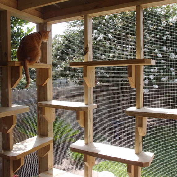 Marvelous Catio Or A Patio For Your Cat