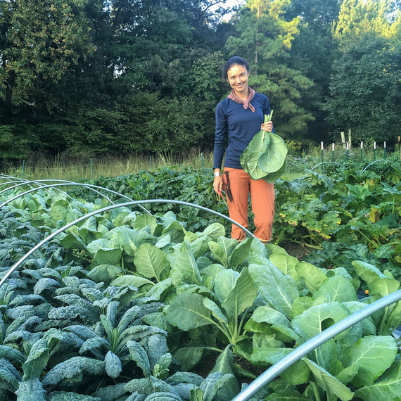 woman harvesting kale collards plants