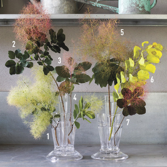 numbered-smokebush-arrangement-2014.33.5d.605-d111407.jpg