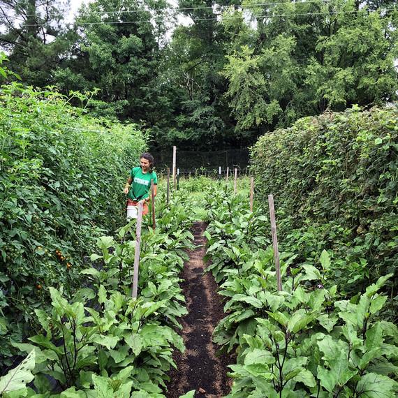 vera harvesting cherry tomatoes ten mothers farm