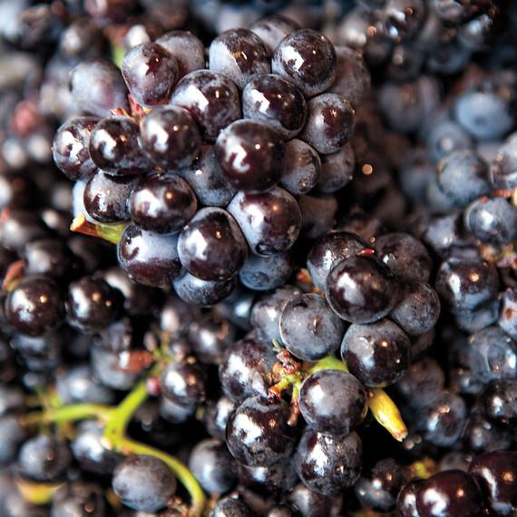 msl-jeff-cerciello-grapes-chef-road-trip-0432-md109521.jpg