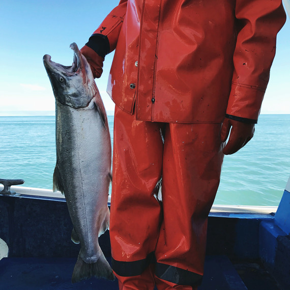 nelly hand copper river coho salmon drfiters fish