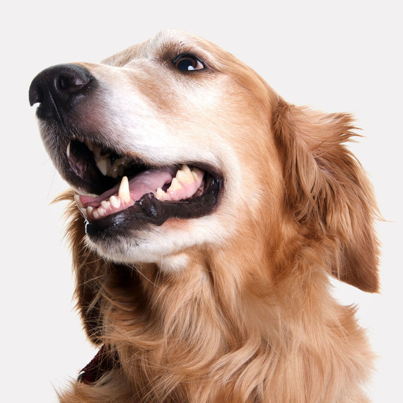 Chew on This: Why It's Important to Clean Your Dog or Cat's Teeth