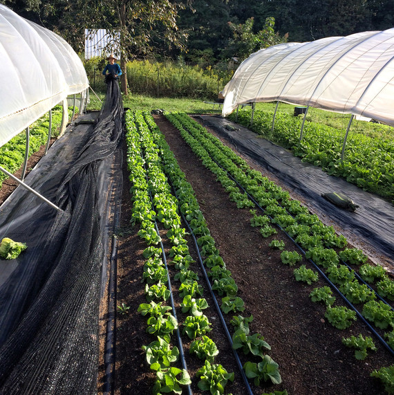rolling shade cloth to protect produce