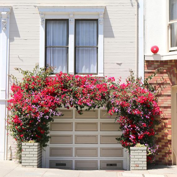 garage_flowers--2-.jpg (skyword:250372)