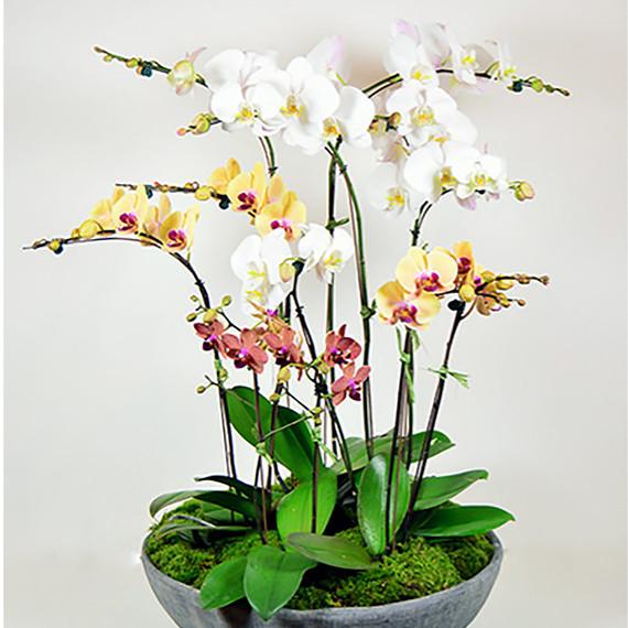 orchid_bowl.jpg (skyword:339357)
