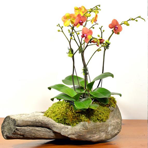 orchid_driftwood.jpg (skyword:339361)