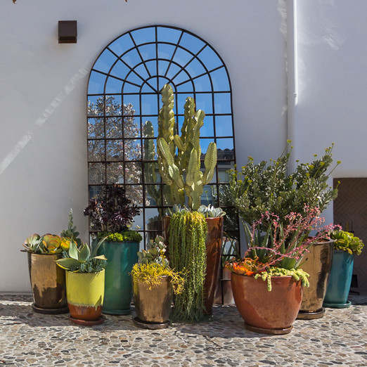 potted cactuses outside