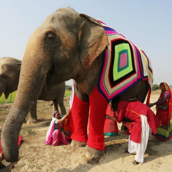 98112cd34216 You Can Help Knit Giant Sweaters For Rescued Elephants