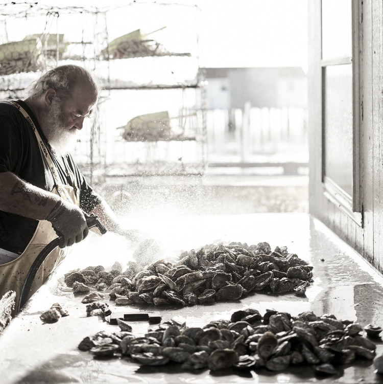 rinsing oysters poormon