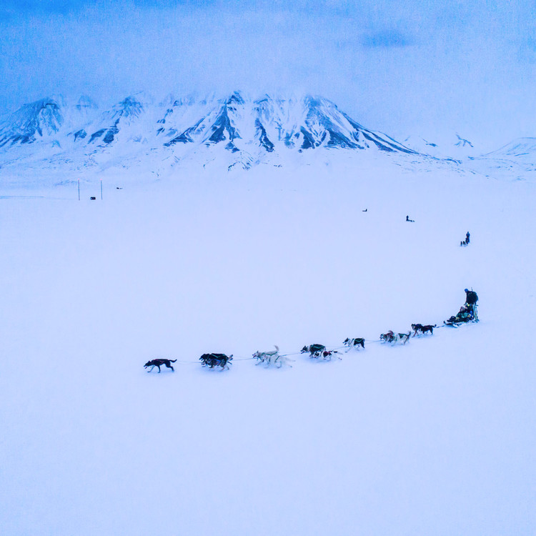 dogsledding in snow with mountains in background
