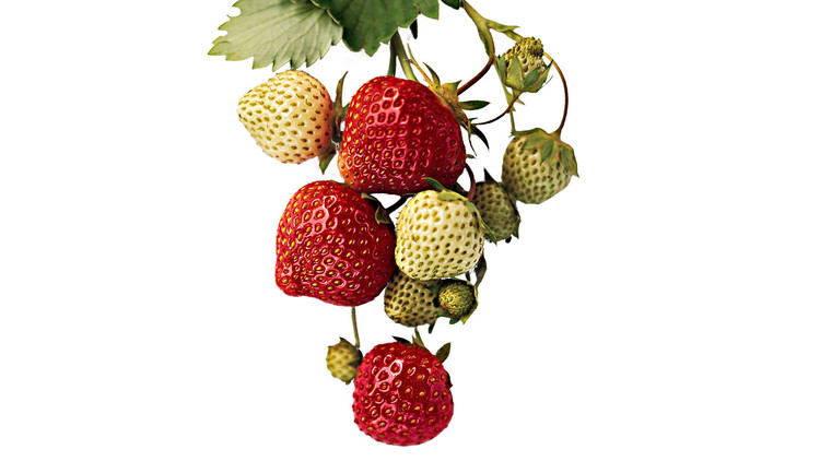 martha's strawberry jam berries vine