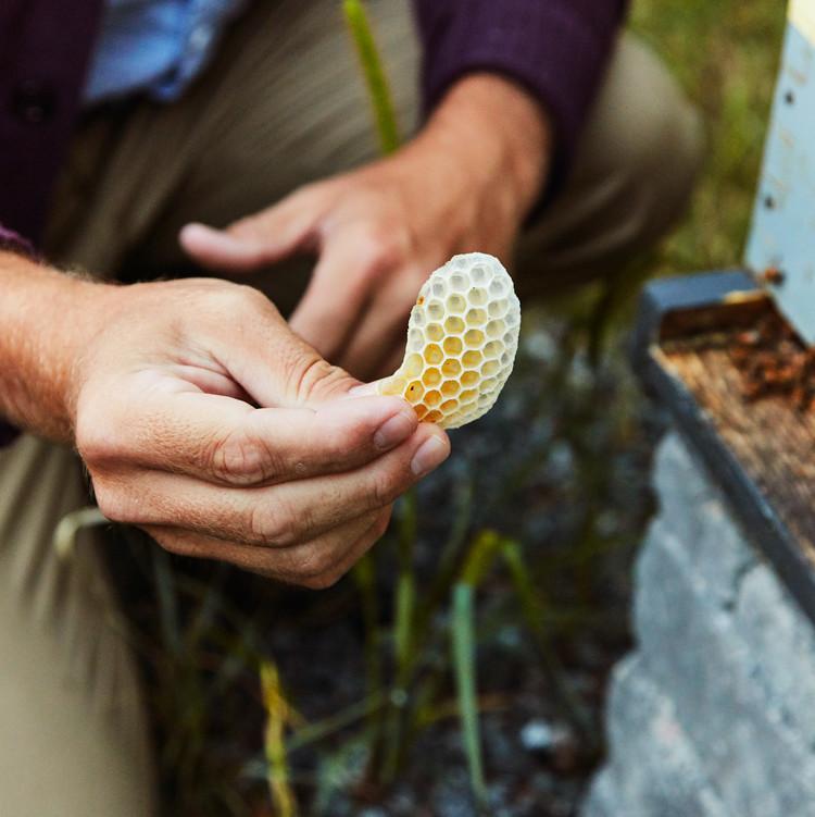 honeycomb beekeeper